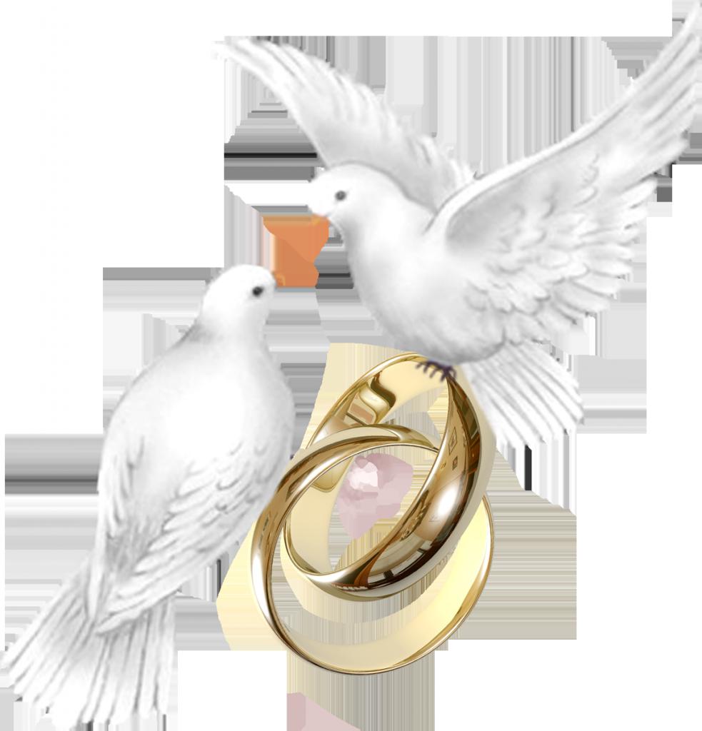 Открытка на венчание голуби, прикольные картинки