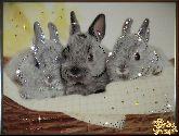 Картина Братцы кролики