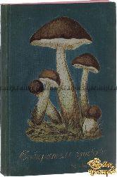 Кайгородов Димитрий. Собиратель грибов