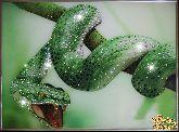 Картина Зеленый Змей