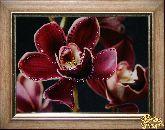 Картина Цветок орхидеи