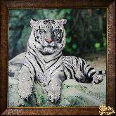 Картина Тигруля