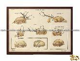 Плакат «Обработка птицы»