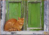 Кот у окна, картина, Модерн животный мир №16