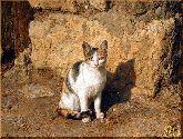 Трехцветная кошка, картина, Модерн животный мир №24