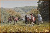 Дикие лошади, картина, Модерн животный мир №27