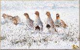 Птички в снегу, картина, Модерн животный мир №30