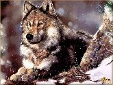 Волк, картина, Модерн животный мир №33