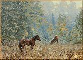 Кони на пастбище, картина, Модерн животный мир №47