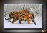 Амурские тигры, картина, Модерн животный мир №51