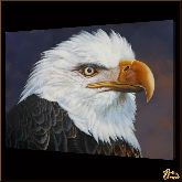 Белоголовый орел, картина, Модерн животный мир №55