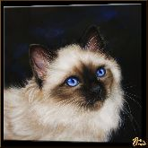 Сиамский котик, картина, Модерн животный мир №59