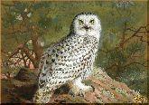 Полярная сова, картина, Модерн животный мир №61