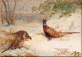 Птицы, картина, Модерн животный мир №62