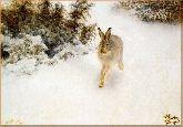 Заяц, картина, Модерн животный мир №70
