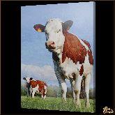 Пятнистые коровы, картина, Модерн животный мир №72