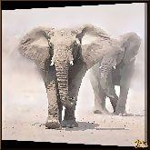 Два слона, картина, Модерн животный мир №73