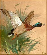 Утка в полете, картина, Модерн животный мир №83