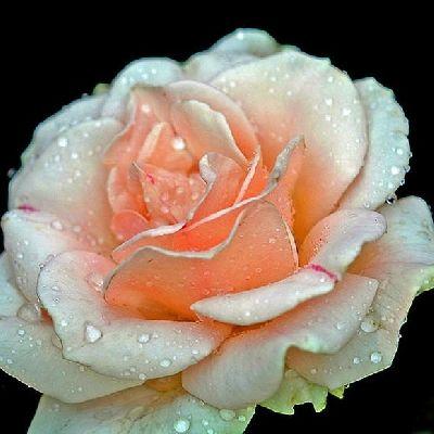 Открытка цветы 295